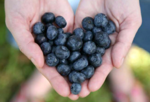Blueberries-in-hand